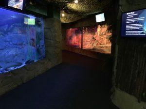 NZA Low lighting in aquarium 300x225