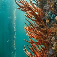 Underwater Observatory Busselton 1