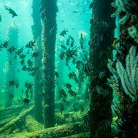 Underwater Observatory Busselton 2