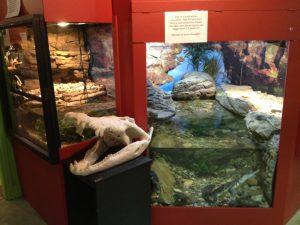 Canberra Reptile Park 4 300x225