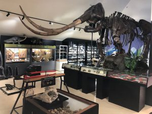 National Dino Museum 4 300x225