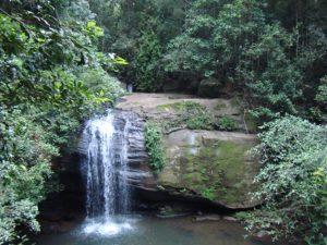 BuderimForestConservation waterfall 300x225