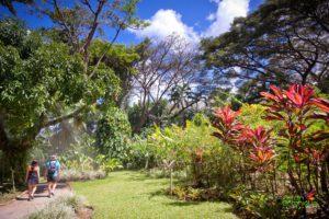 jardin botanique deshaies guadeloupe 7 300x200