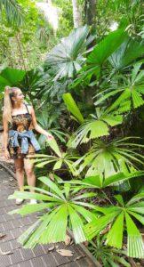 daintree rainforest tour from cairns 552x1024 1 162x300