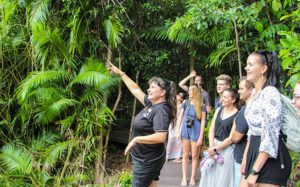 jungle tours guided rainforest boardwalk walk 300x187