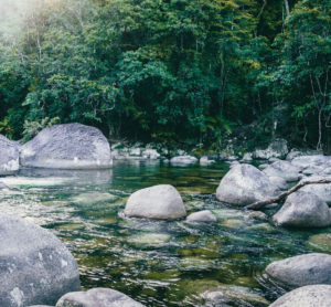 mossman gorge private charter from cairns 300x278