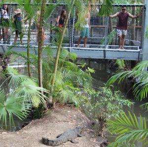 port douglas activities wildlife habitat predator plank 300x298